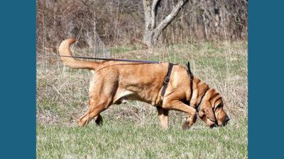 Bloodhound 14