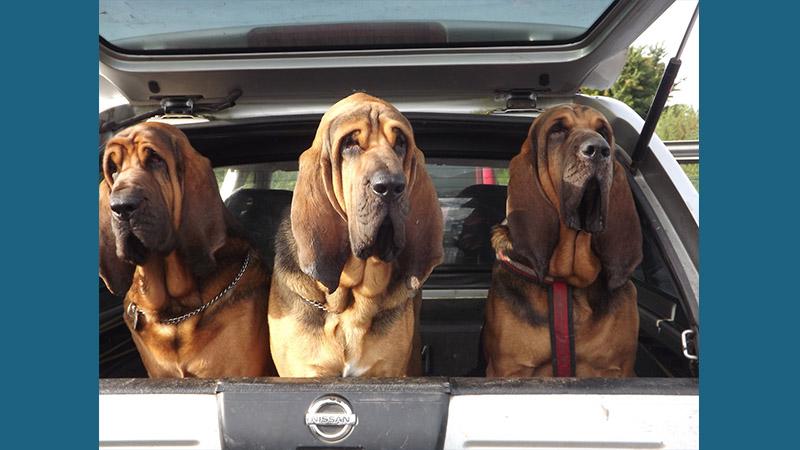 Bloodhound 2