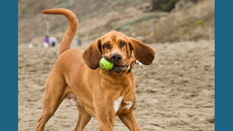 Bloodhound 3