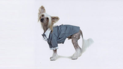 Chinese Crested 8