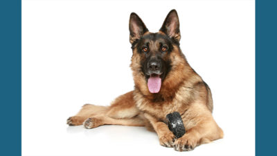 German Shepherd Dog 4