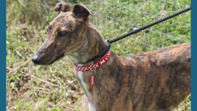 Greyhound 14