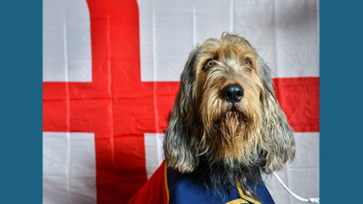Otterhound 8