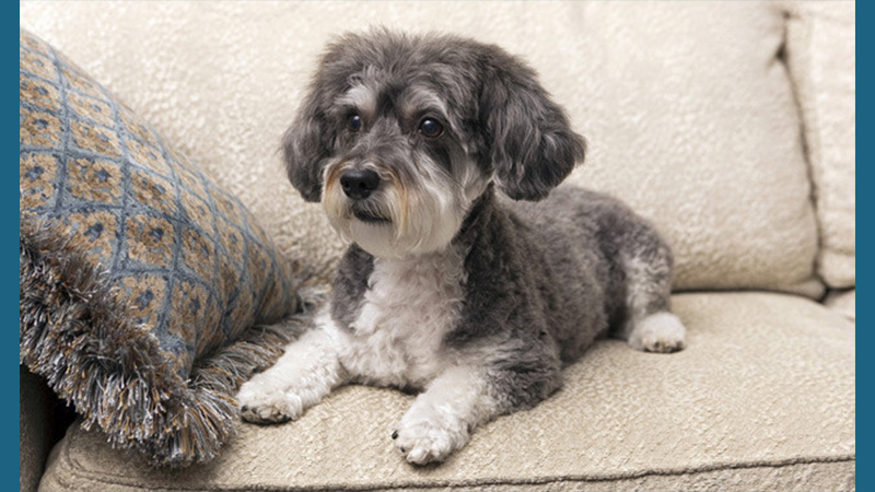 Schnoodle 2