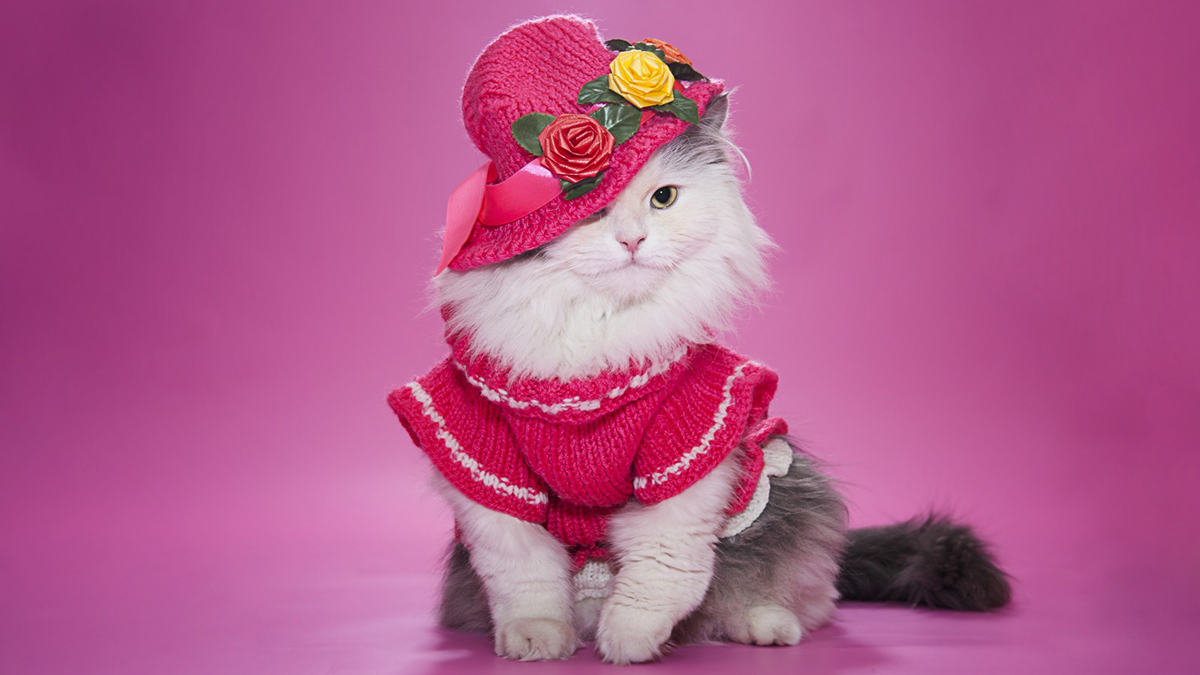 Entertainment Gallery Cat Costume 1