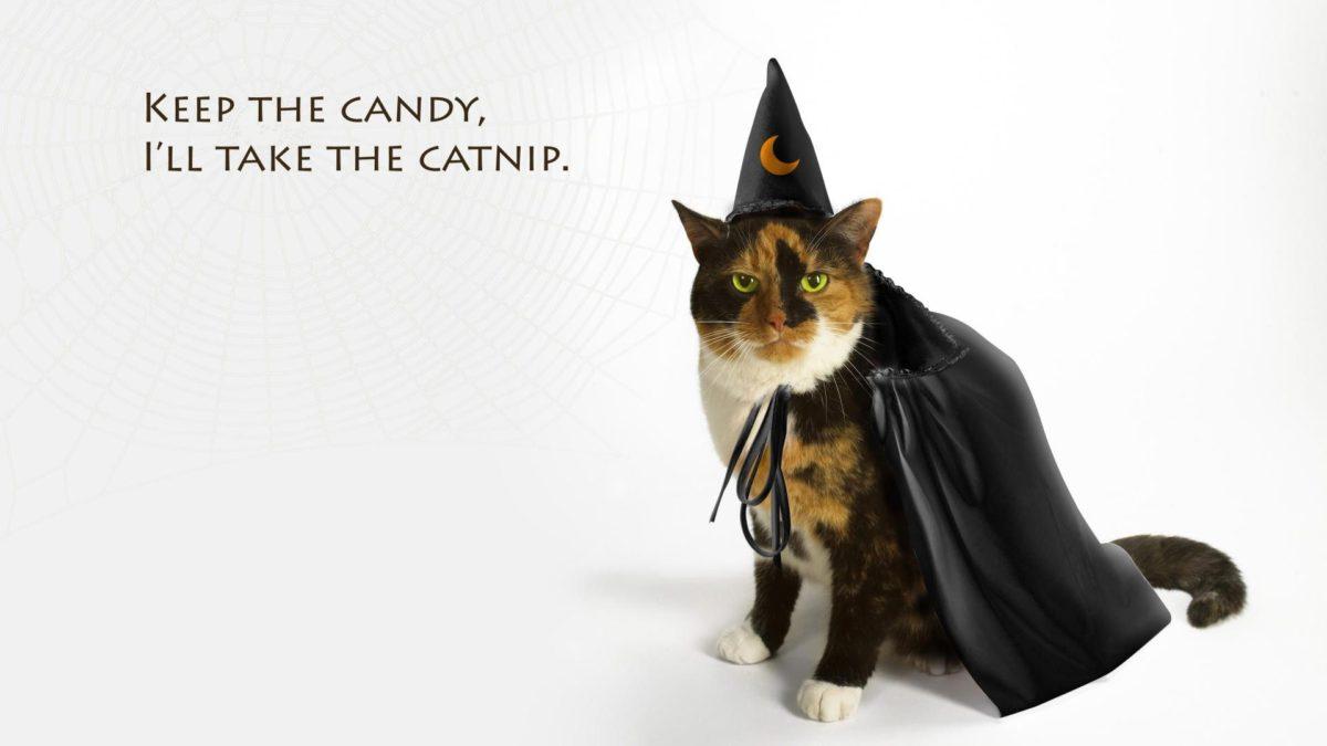 Entertainment Gallery Cat Costume 2