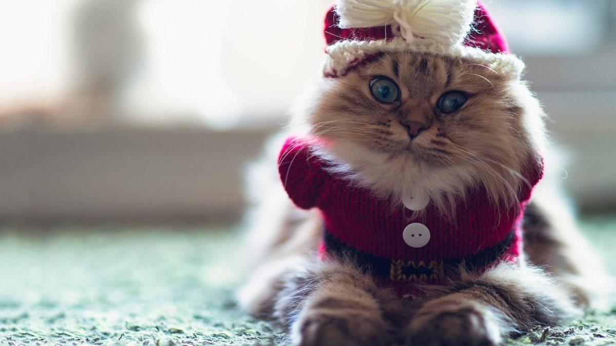 Entertainment Gallery Cat Costume 3