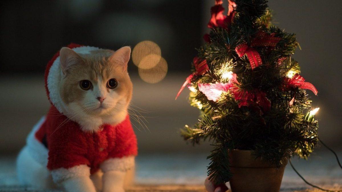 Entertainment Gallery Cat Costume 4