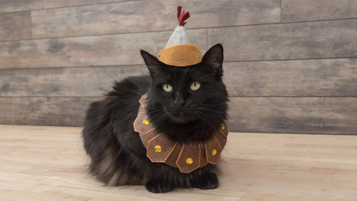 Entertainment Gallery Cat Costume 5