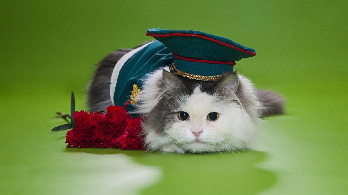Entertainment Gallery Cat Costume 6