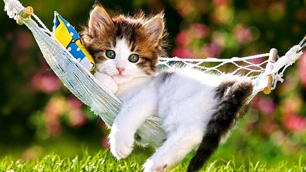 Entertainment Gallery Cat Funny 6