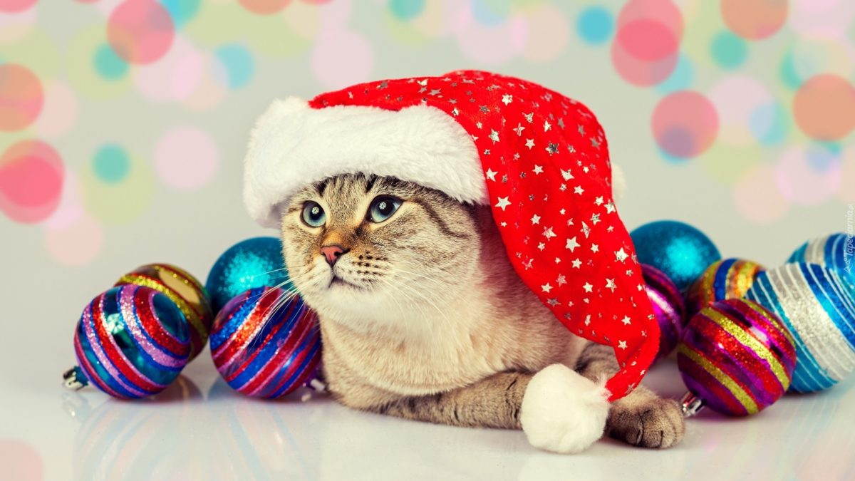 Cat wearing Santas hat with Christmas decoration