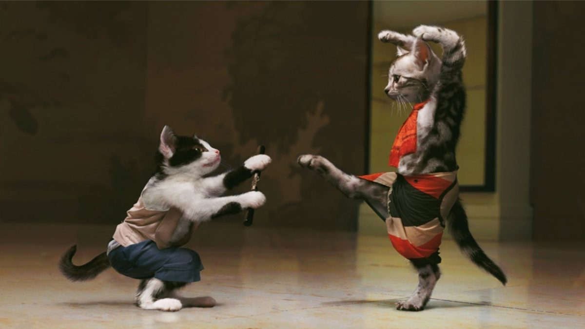 Entertainment Gallery Cat Photomontage 5