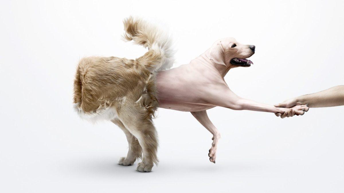Entertainment Gallery Dog Photomontage 3