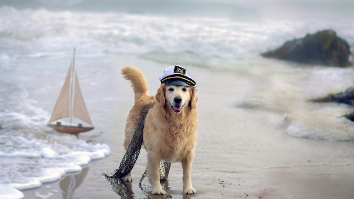 Nature Humor Beaches Waves Costume Cute Sailboats Boats Photos Boxer Dogs