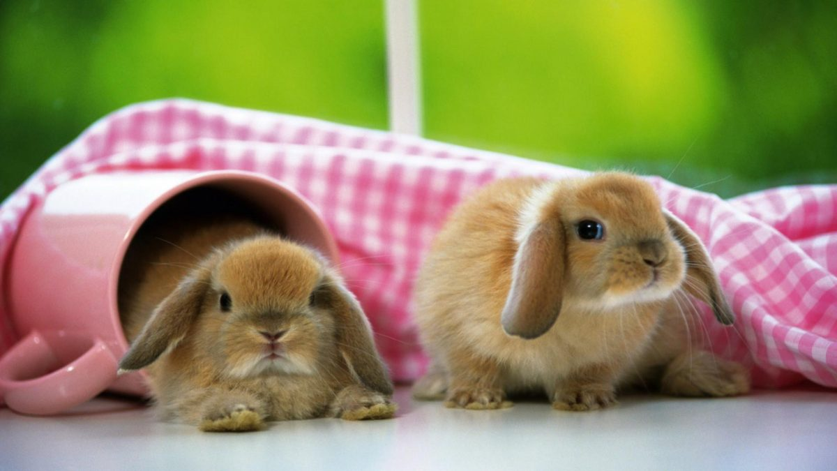 Entertainment Gallery Other Pet Wallpaper 4