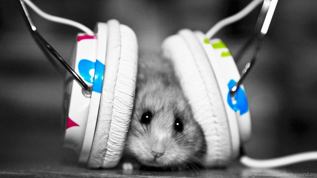 Entertainment Gallery Other Pet Wallpaper 5