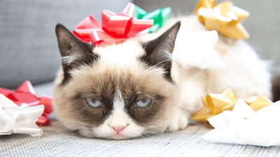 Grumpy Cat 3