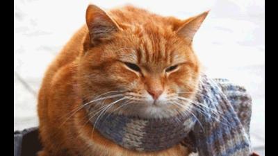 Streetcat Bob 3
