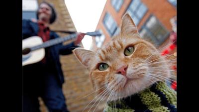 Streetcat Bob 5
