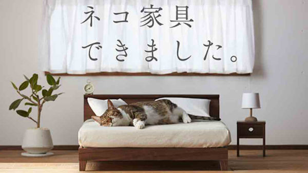 News Cat on Bed Okawa City
