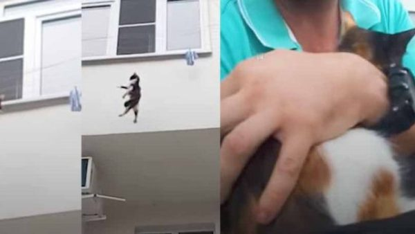 Rescue Falling Cat By Backpack