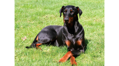 Black and Tan Dog 4