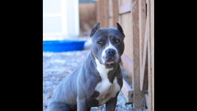 Blue Dog 3