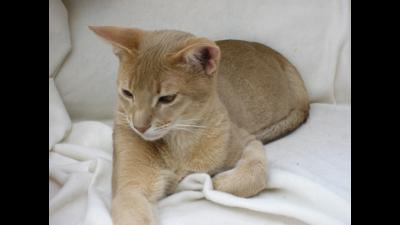 Fawn Cat 2