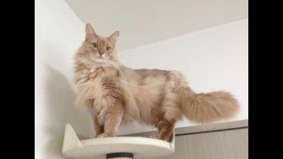 Fawn Cat 3
