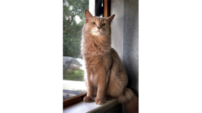 Fawn Cat 4