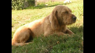 Fawn Dog 4