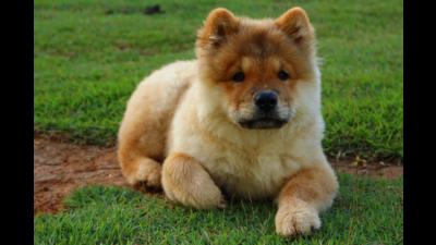 Fawn Dog 6