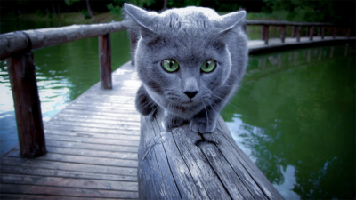 Gray & Blue Cat 2