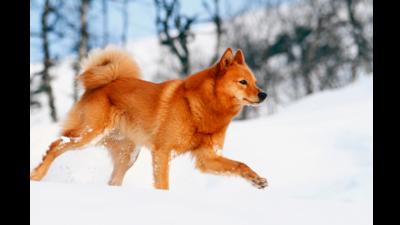 Orange Dog 2