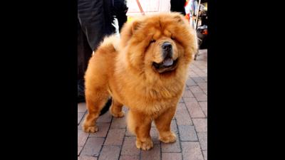 Orange Dog 4