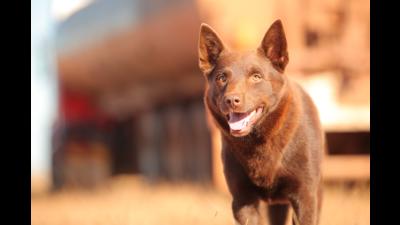 Red Dog 3