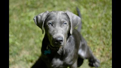 Silver Dog 5
