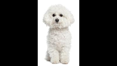 White Dog 4